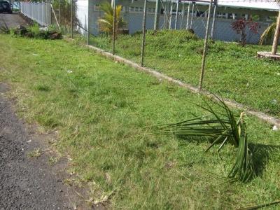 Samoa9_8.jpg