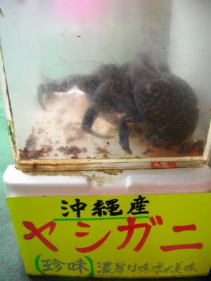 okinawa054.JPG