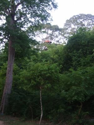 s-treehouse2.jpg