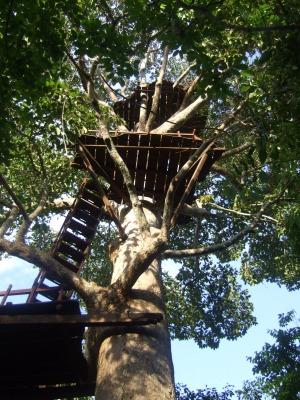 s-treehouse4.jpg